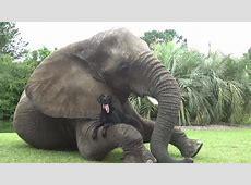 Hund und Elefant sind die besten Freunde Video