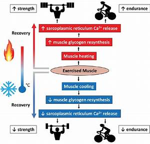 Effects Of Muscle Temperature On Post