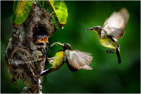 birds and quotes about family quotesgram