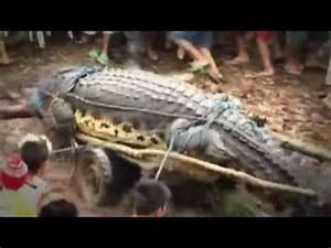 Man-Eating Super Croc - YouTube