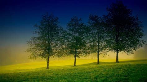 Four Trees Wallpaper  1600x900 #30202