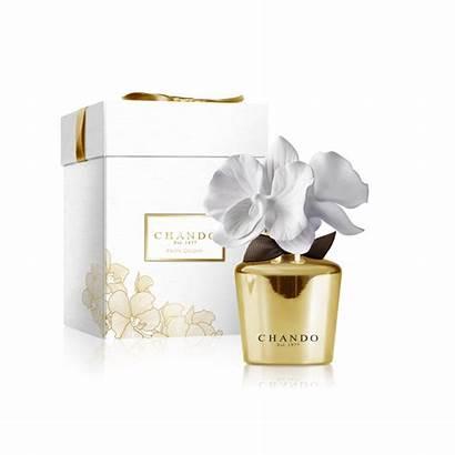 Diffuser Chando Fragrance Pfingstrose Porzellan Aroma Golden