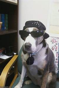 cool dude funnydogsite funny dog pictures funny dogs