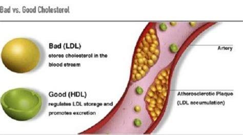 Trigliceridi Alimentazione Trigliceridi Ed Alimentazione