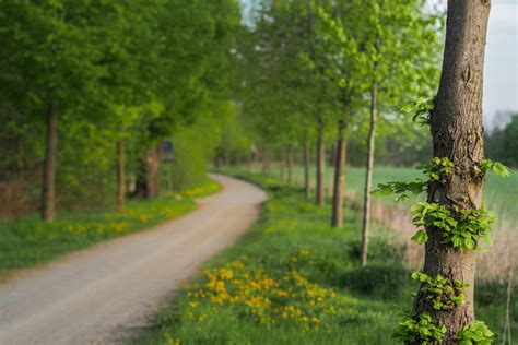 nature close  tree leaves green flower flowers track