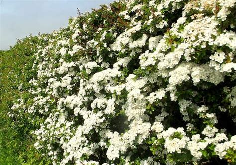 Why Plant A Native Hedge Best4hedging