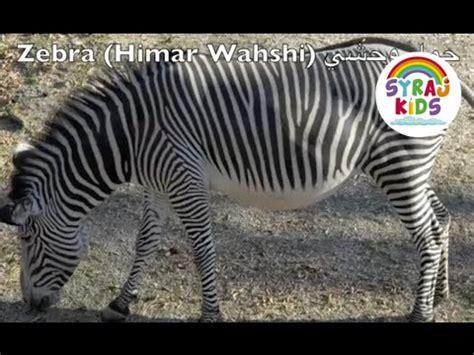 Zoo Animals  Arabic & English حديقة الحيوانات بالعربية و الانجليزية Youtube