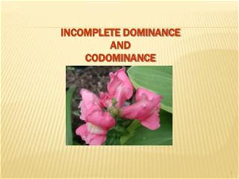 Ppt  Codominance , Incomplete Dominance, Polygenic Traits, & Multiple Alleles Powerpoint