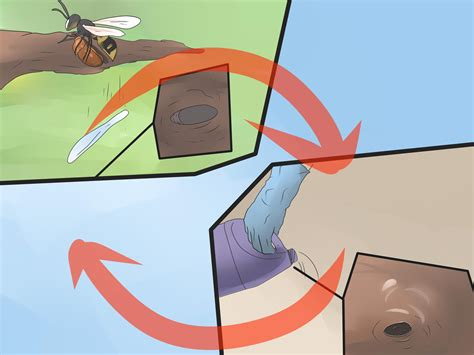 Get Rid Of Wasps In Garden by How To Get Rid Of Ground Digger Wasps Cicada Killers