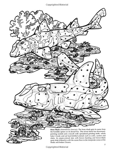 Robot Check   Shark coloring pages, Shark facts, Coloring