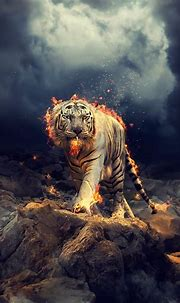 Raging White tiger Wallpapers   HD Wallpapers   ID #25213