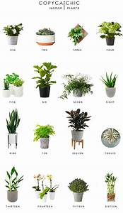 home trends indoor plants copy cat chic With kitchen cabinet trends 2018 combined with live plant wall art