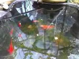 Goldfische Im Teich : goldfische und schleien im teich nach dem winter youtube ~ Eleganceandgraceweddings.com Haus und Dekorationen