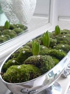 Amaryllis In Wachs Selber Machen : mit der amaryllis blumenzwiebel machen sie die wundersch nsten herbst und weihnachts deko ~ Orissabook.com Haus und Dekorationen