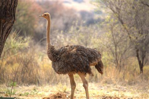 tiere  namibia flohblog