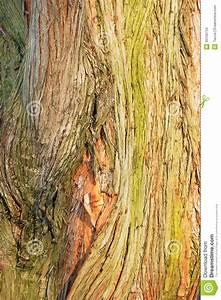 Comment Creuser Un Tronc D Arbre : tronc d 39 un grand arbre photo stock image du botanique 30156734 ~ Melissatoandfro.com Idées de Décoration