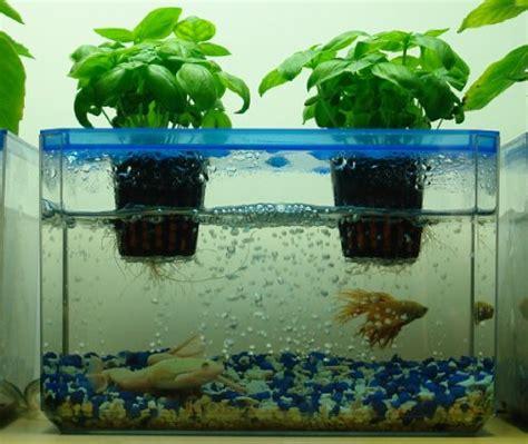 hydroponic gardening with fish aquaponics kit aquafarm