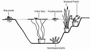 Pond Plants  Water Plants  Aquatic Plants