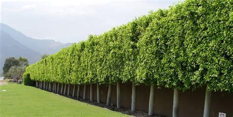 sound barrier shrubs landscape wind breaks landscaping network
