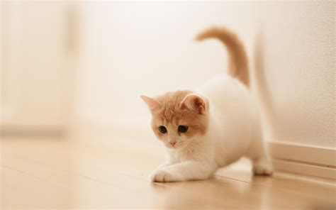 Cute Funny Cat Wallpapers & Image Download 2019
