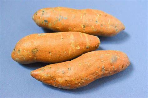 comment cuisiner les patates douces 17 meilleures idées à propos de plante de patate douce sur