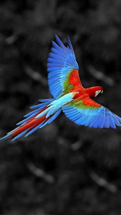 Mobile Phone Wallpapers Bird Flying