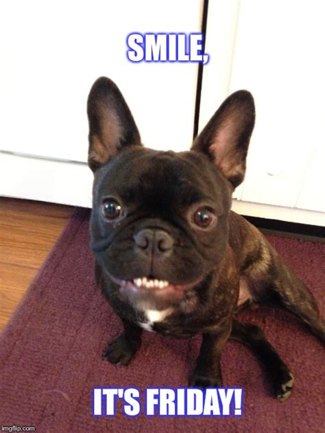 French Bulldog Meme - happy dog imgflip