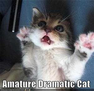 """The Best Of, """"Overly Dramatic Animals"""" - 24 Pics"""