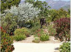 Australian Native Plants • Resources • 8007016517