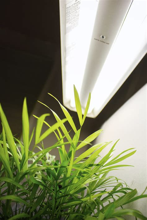 light plants for fluorescent grow lights learn about different types of