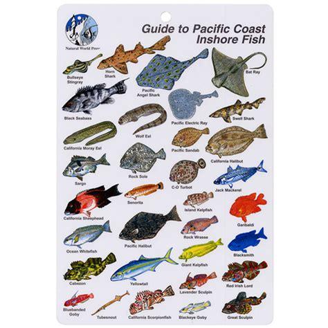 pacific inshore coast fish id card