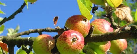obstbäume vor schützen garten winterfest machen pflanzen 252 berwintern tipps tricks