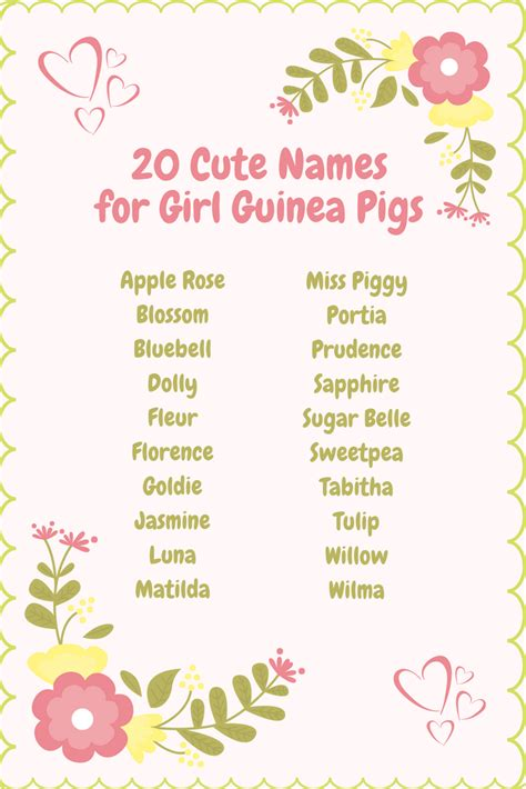 names for pigs girl guinea pig names cute female guinea pig names name list