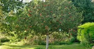 Apfelbaum Für Balkon : der optimale standort f r obstgeh lze mein sch ner garten ~ Michelbontemps.com Haus und Dekorationen