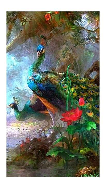 Peacock Animated Decent Scraps