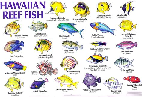 aloha joe  hawaii  visual guide  hawaiis reef fish