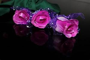 Violet Roses 2 Free Stock Photo - Public Domain Pictures