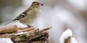 Vögel Füttern Ab Wann : v gel f ttern im winter wie lange und ab wann winterf tterung ~ Frokenaadalensverden.com Haus und Dekorationen