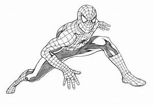 Drawn spider-man sketch - Pencil and in color drawn spider ...