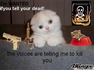 Evil Kitten Picture #89914971 | Blingee.com