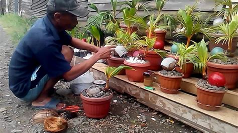 membuat bonsai kelapa youtube