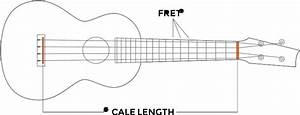 Concert Vs  Tenor Ukulele  What U0026 39 S The Difference