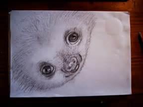 Cute Baby Sloths Drawings