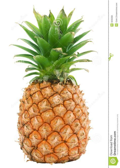 pineapple isolated stock photo image  ananas island