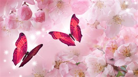 Bibit Collagen Japanese Cherry pink cherry blossoms desktop background wallpapers