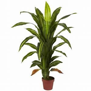 Fresh Best Indoor Potted Plants #19461
