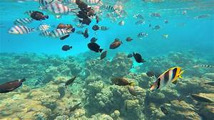 Colorful tropical fish in undersea Paradise swimming in ...