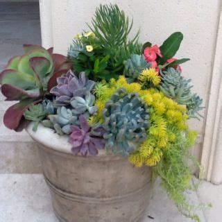 potting succulents indoors 17 best images about green thumb on pinterest gardens bottle and plastic milk bottles