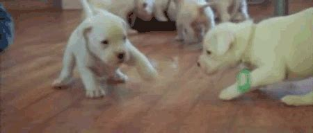 The Cutest Puppy Gifs Youll Ever See Numbers   Are Mine Cube Breaker