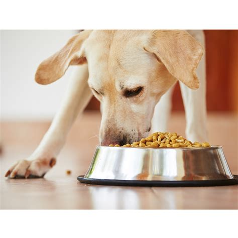 pet food safety features cdc